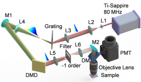 Figure 2. Optical configuration of the scanless TPE microscope based on a single DMD; M1, M2: high-reflectivity mirrors; L1-L6: lenses; DM: dichroic mirror; and PMT: photomultiplier tube.