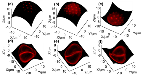 Figure 4. Cross-sectional images of two selected pollen grains on arbitrarily programmed spherical surfaces (a) - (c) and sinusoidal surfaces (d) - (f).