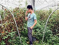 在八卦洲紅杜鵑生態農業園摘蕃茄(樊德智同學攝於環保交流營)